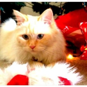 Wellingtons Christmas Cheer